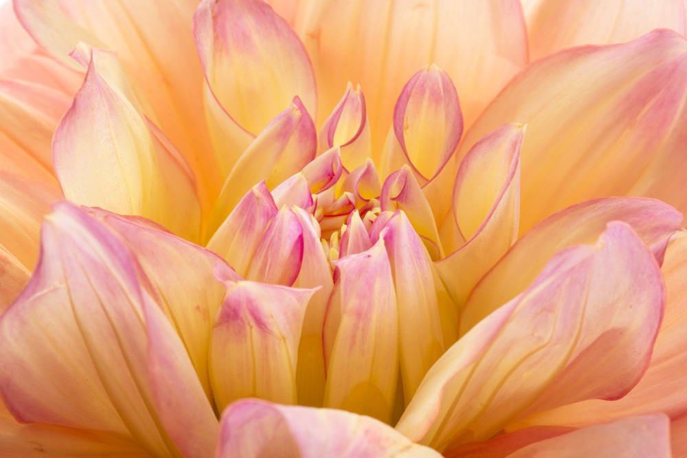 Impressive Photograph of a Flower in Bloom | Susan Michal Fine Art