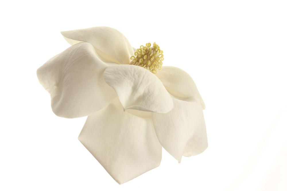 Maggie | Photograph of a Magnolia | Susan Michal Fine Art