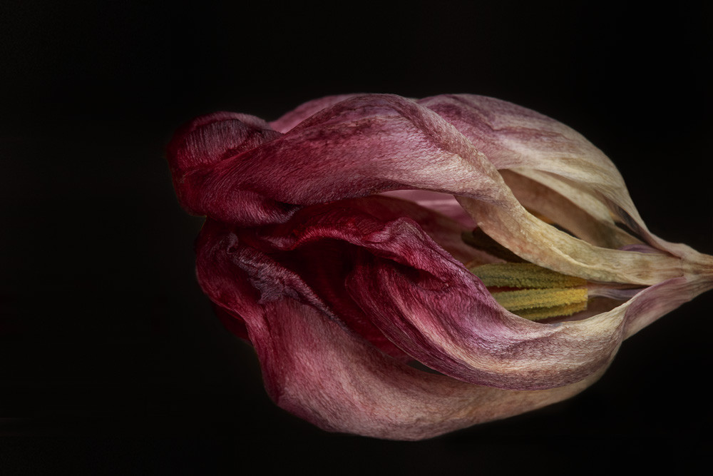 Imposing Photograph of a Withered Flower | Susan Michal Fine Art