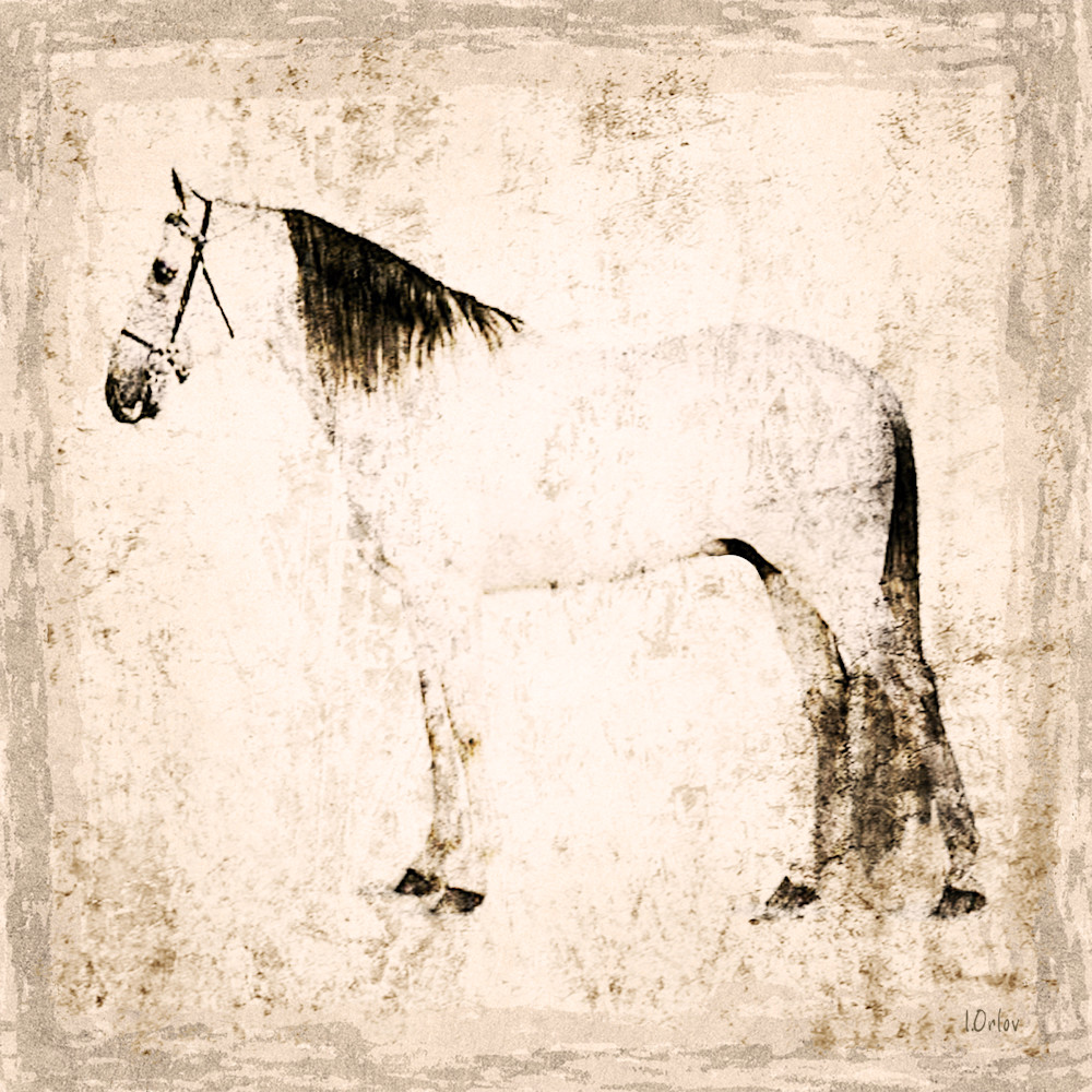 1588 White Horse. Horse Portrait. Equestrian Rustic Wall Art, Textured Decorative Horse Art, Farm House Wall Decor. Cottage Chic Horse Art. Great Selection of Irena Orlov Horse Art