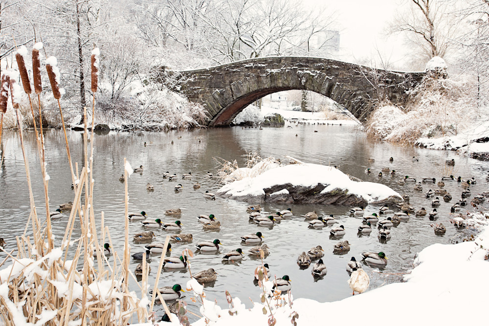 """Gapstow Bridge and Ducks in Snow"" Central Park NYC Fine Art Photograph"