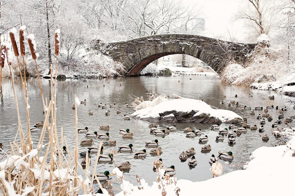 """Gapstow Bridge and Ducks in Snow"" Central Park NYC Fine Art Photograph"