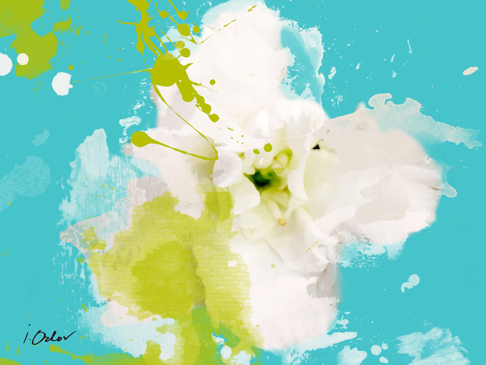Beautiful and Bright, White Flower