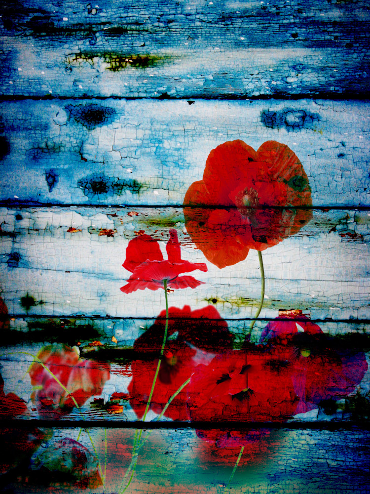 ORL-1092 Poppies on blue I