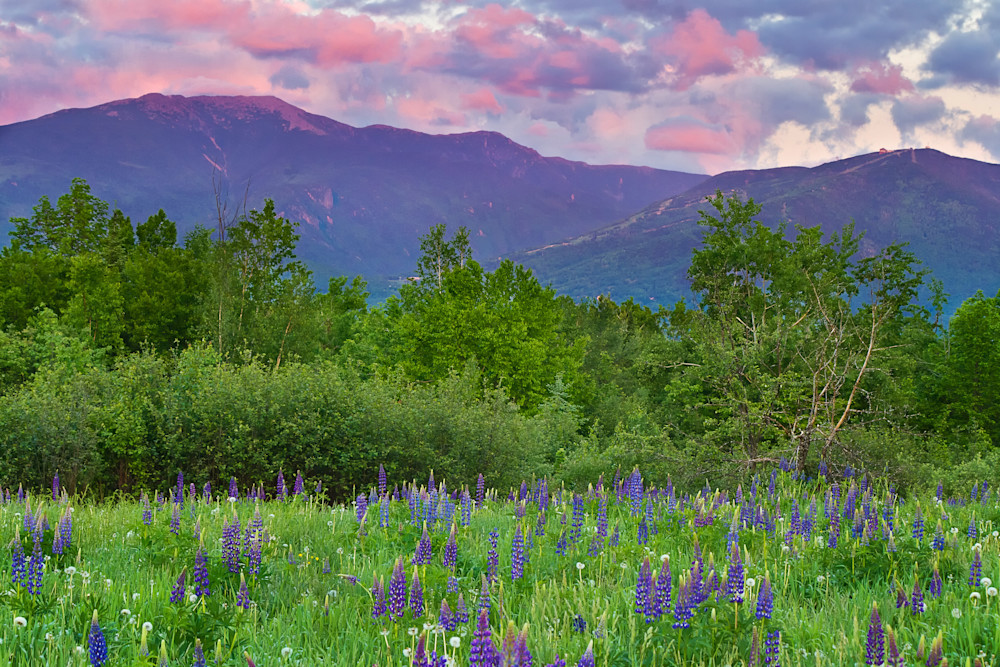 """Lupine Sunset"" Fine art Sugar Hill, New Hampshire mountains photograph"