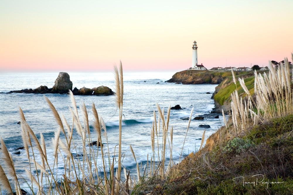 Pampas Grass & Pigeon Point Lighthouse