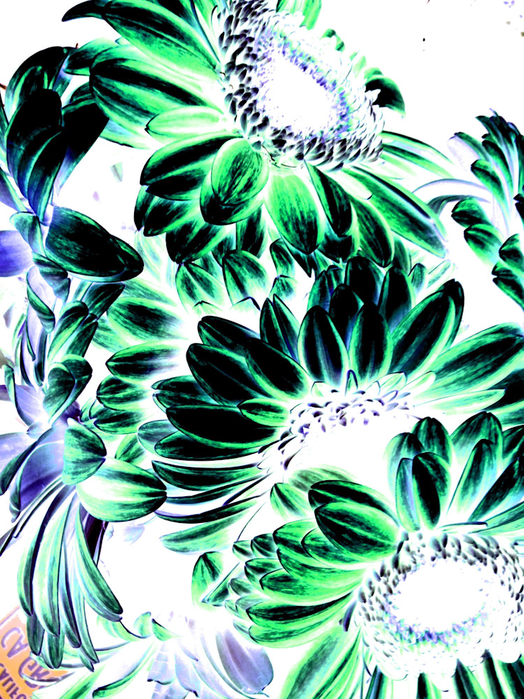 X-Ray Flowers 4