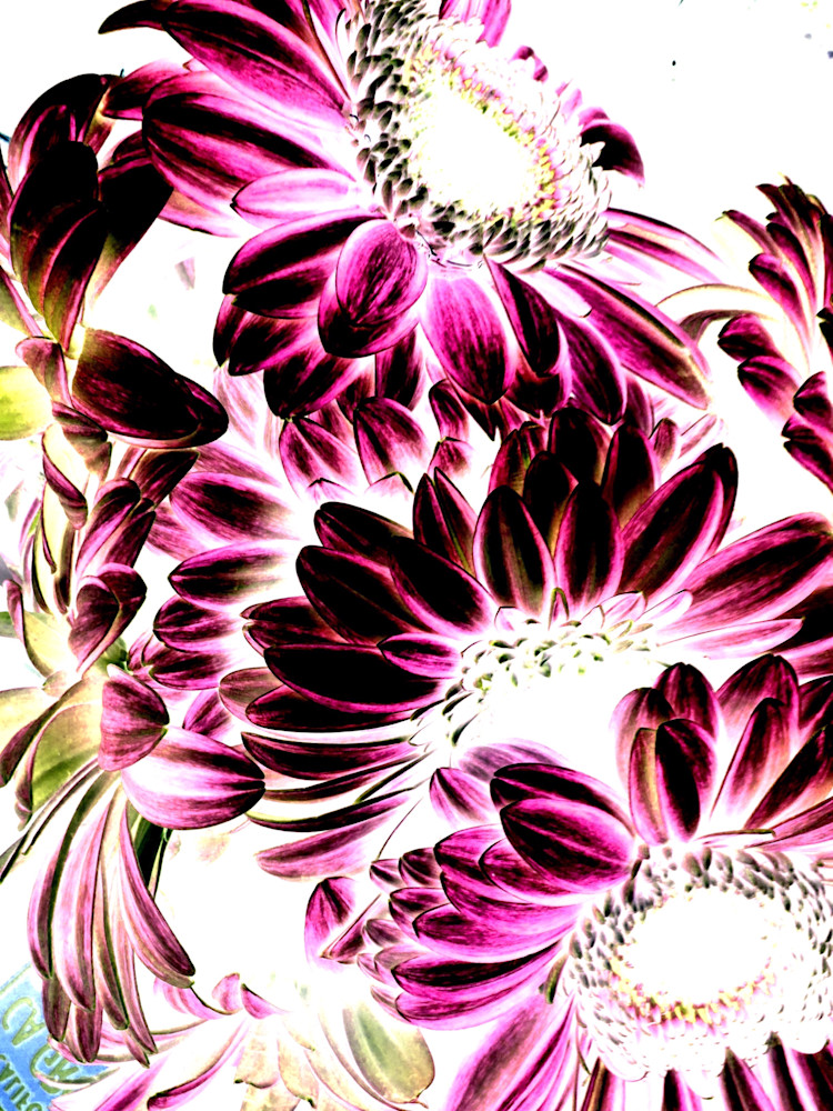 X-Ray Flowers 7
