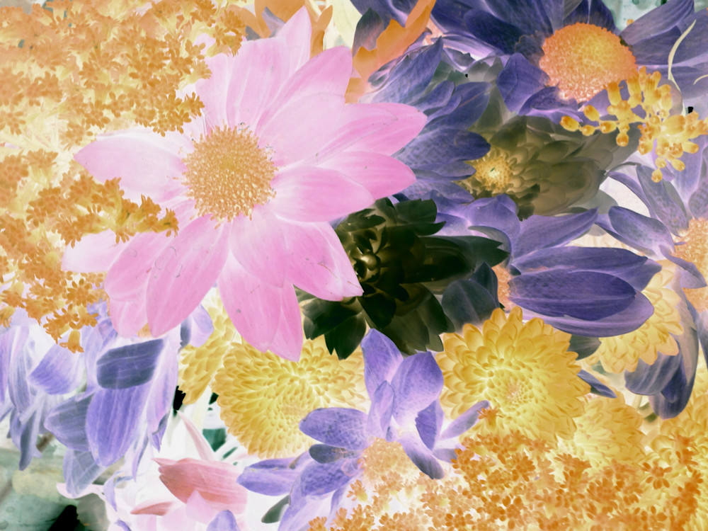 X-Ray Flowers 12