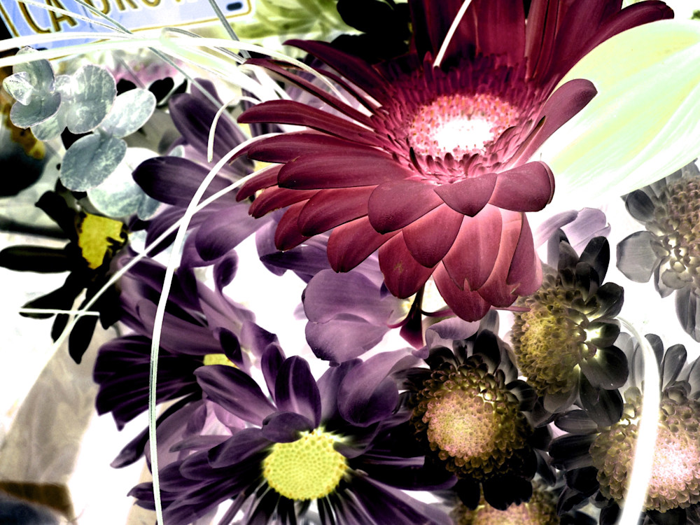 X-Ray Flowers 2