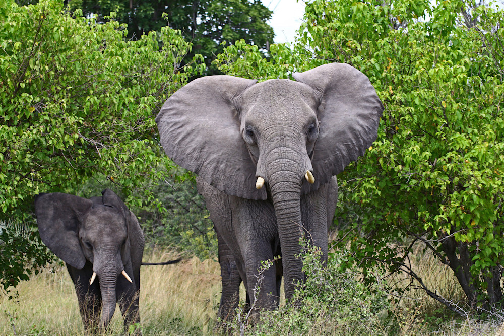 beautiful view of mother and baby elephant