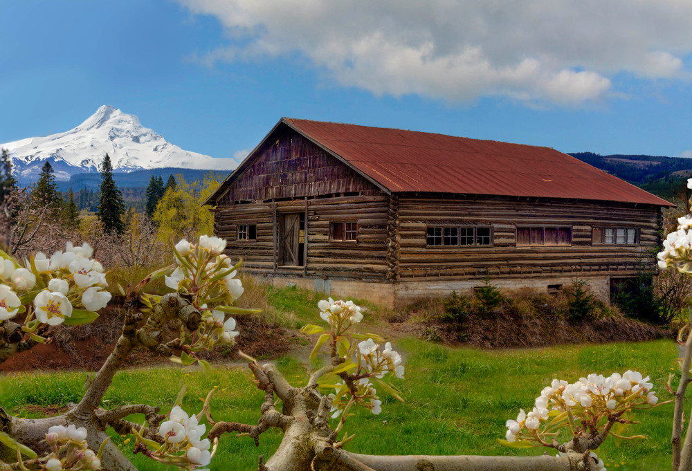 Apple Blossoms and Mount Hood photograph for sale as art by Mike Jensen