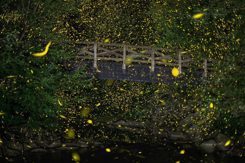 Fireflies of Bennett Park