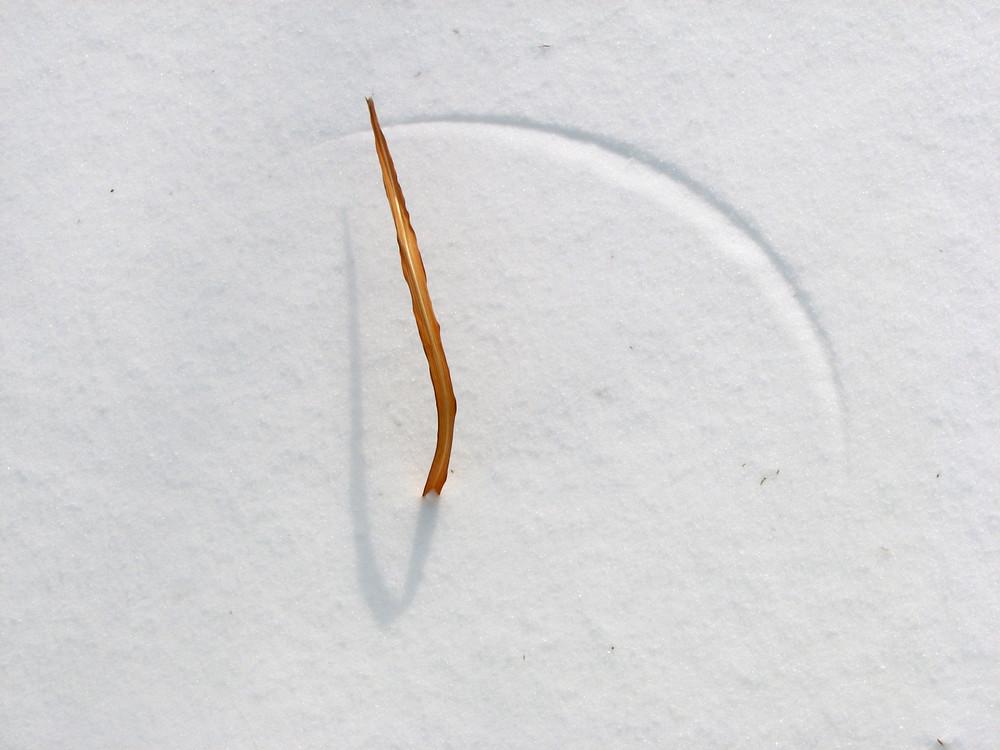 Wind and grass sculpt a design in the snow - fine art photograph