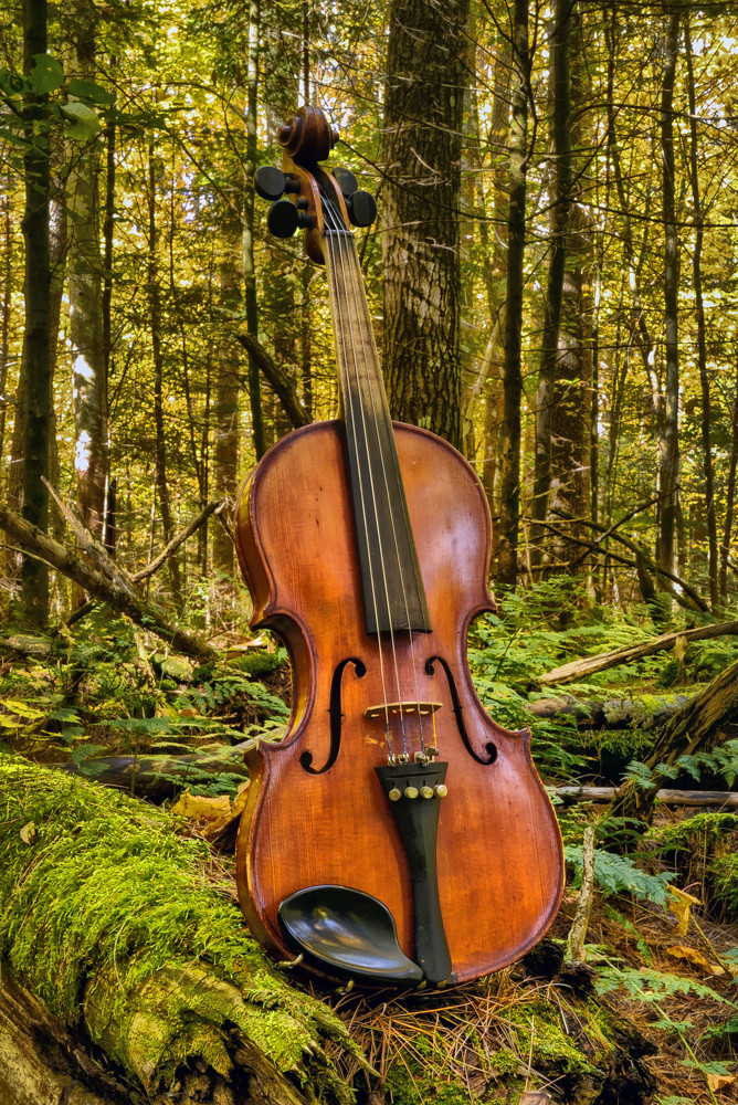 The Woodland Concertmaster Photography Art | Instrumental Art
