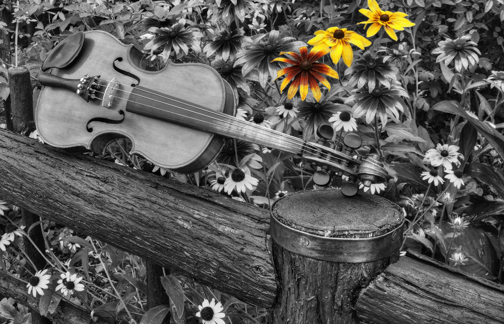 Re Of Sunshine Photography Art | Instrumental Art