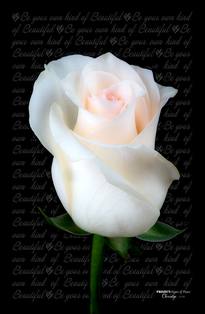 Chrystal's Rose