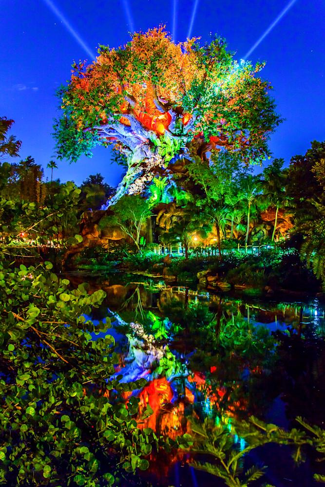 Tree of Life at Night 1 - Disney Art Print   William Drew