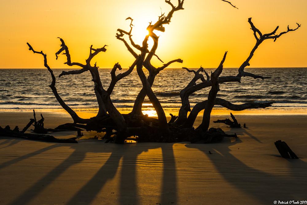 Yoga Tree Photography Art   Patrick O'Toole Photography, LLC