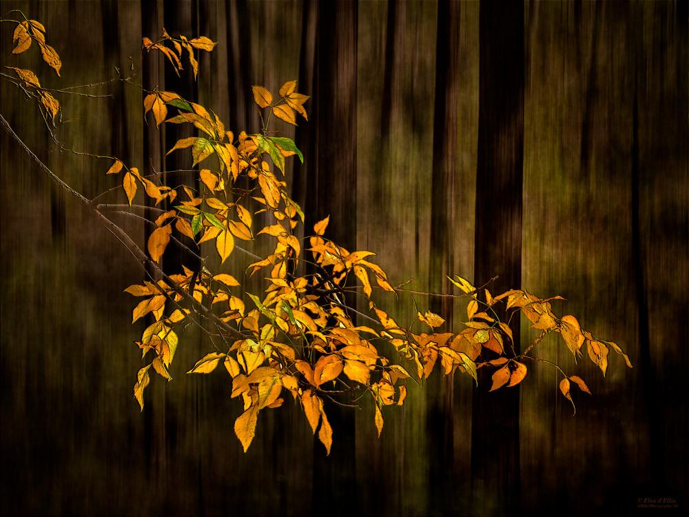Fall Is In The Air, d'Ellis Photographic Art photographs, Elsa