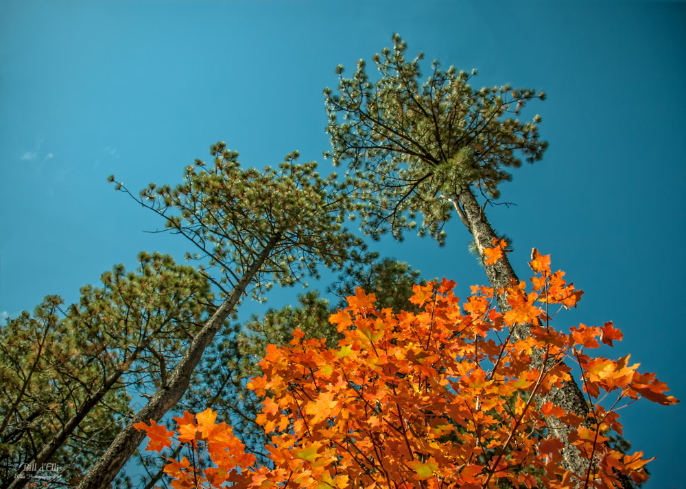 Photo of Colors of Fall, d'Ellis Photographic Art photographs, Bill