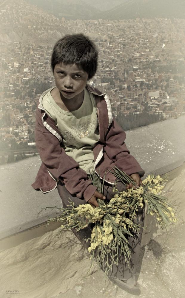 Young Hawker, d'Ellis Photographic Art photographs, Elsa