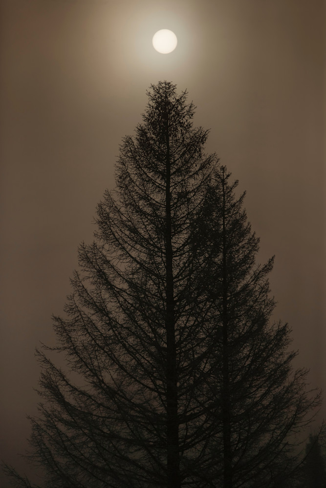 MISTY PINE Photograph by Kurt Gardner