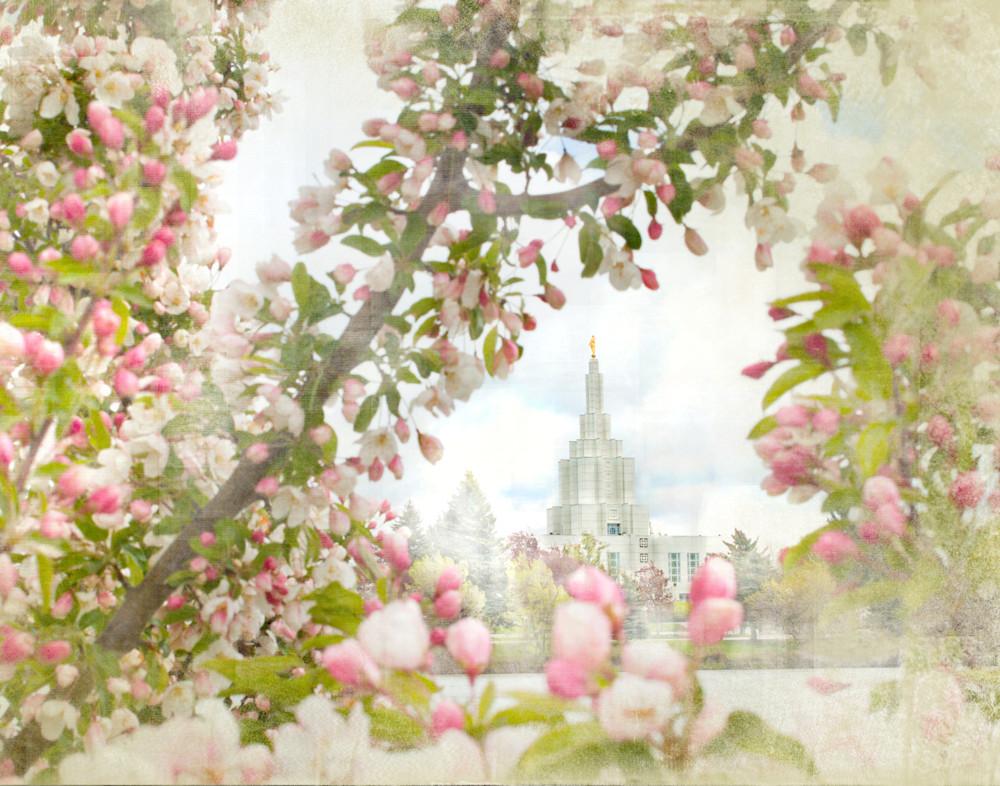 Idaho Falls Temple Pink Spring Art | Mandy Jane Williams Art