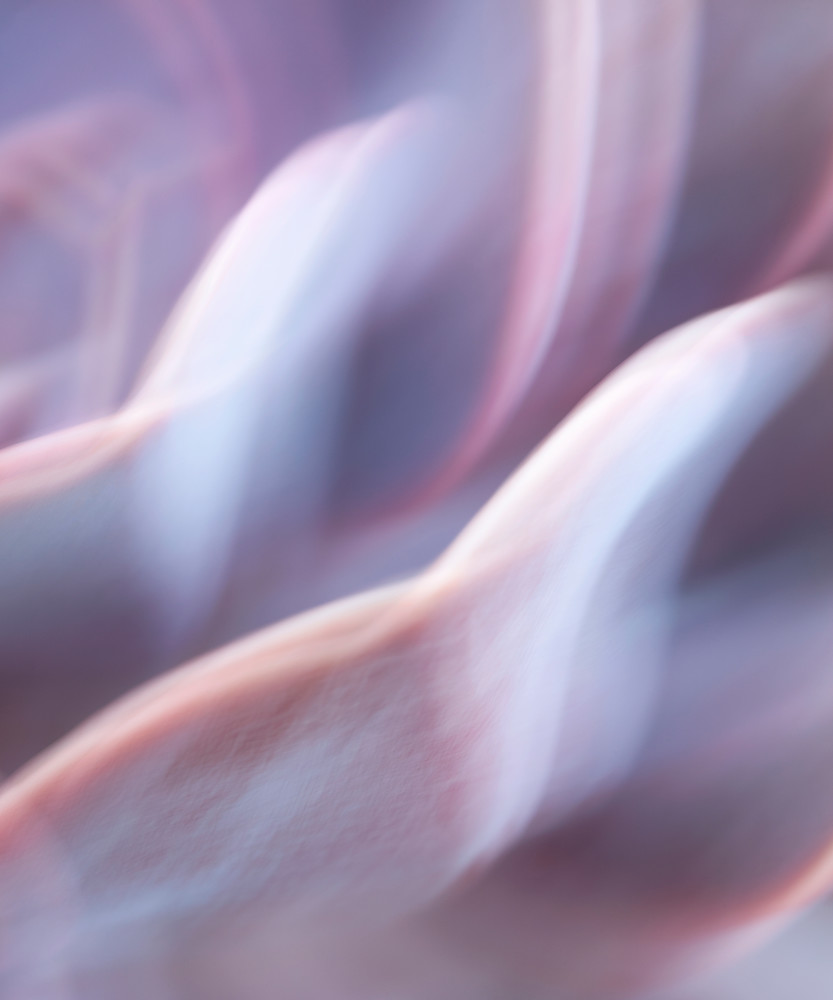 """World of Color #14"" Vertical Abstract Purple Echeveria Plant Photography"