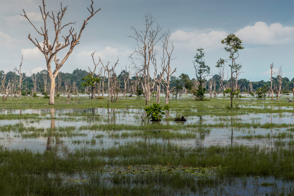 Out of the Water, Cambodia, Neak Pean, Angkor Wat