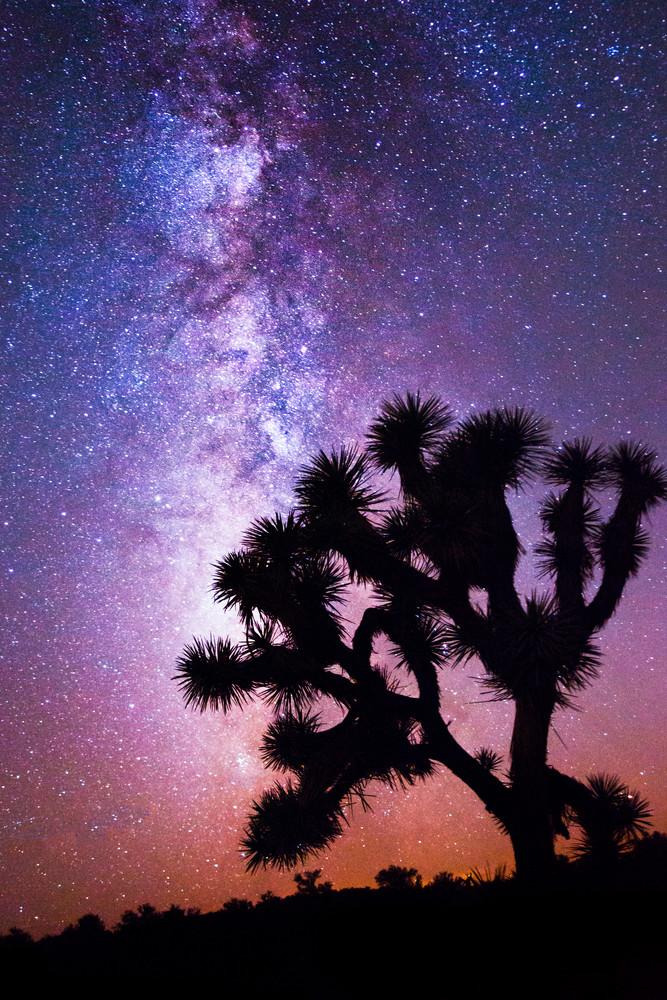 Midnight Bloom, Joshua Tree Night Photography Fine Art Print
