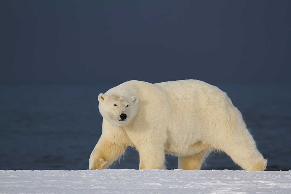 Big Bear Photography Art | Light and Impressions LLC