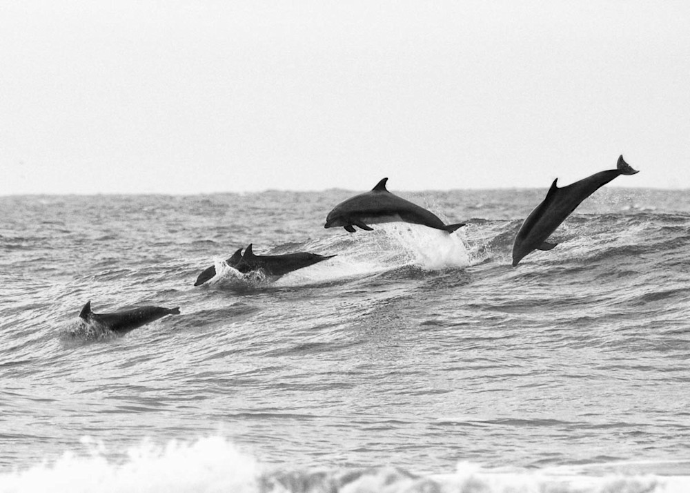 0016_Dolphins in Air