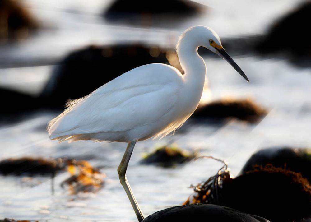 217_Shore Bird