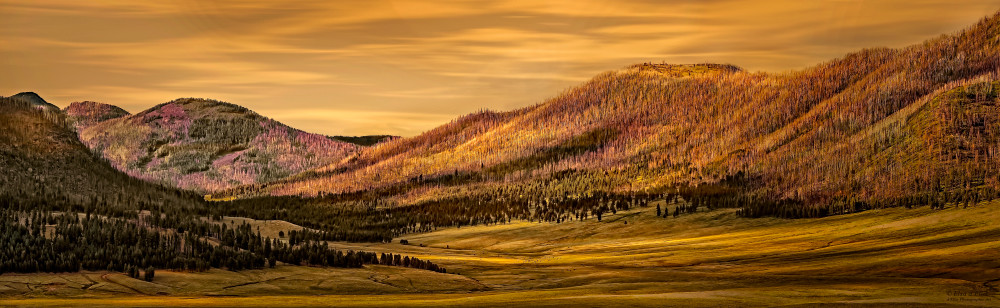 Valles Caldera Renewal, d'Ellis Photographic Art photographs, Elsa