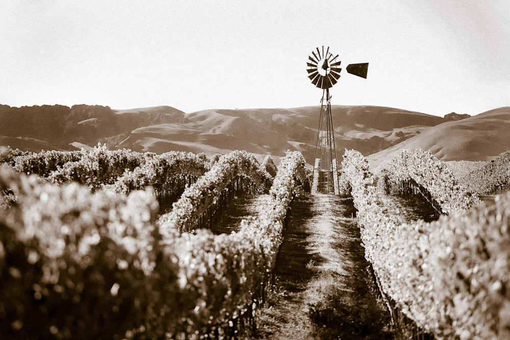"""Windmill Among The Grapes"" - Sepia"