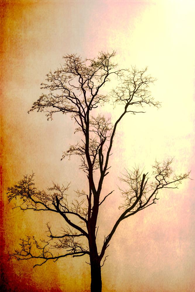 Arbor Five