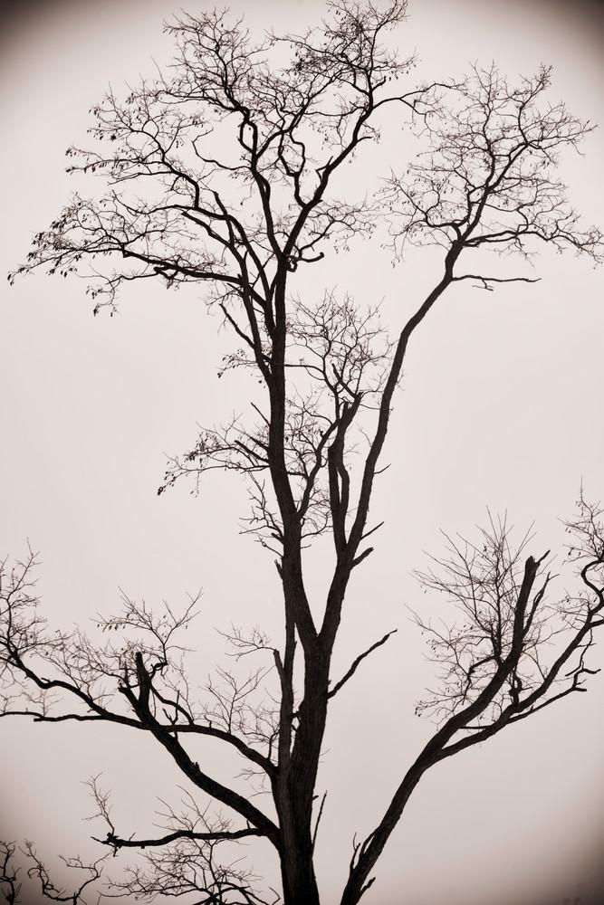 Cd  3413 Photography Art | Kevin Blackburn Art