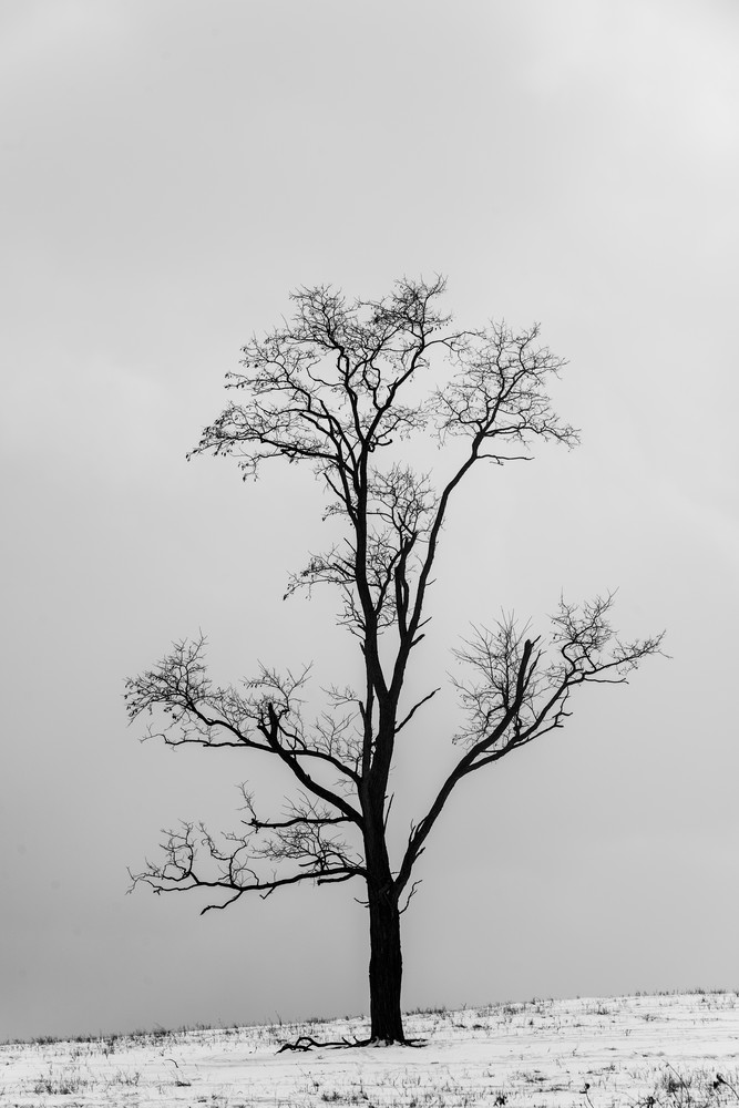 Cd  3412 Photography Art | Kevin Blackburn Art