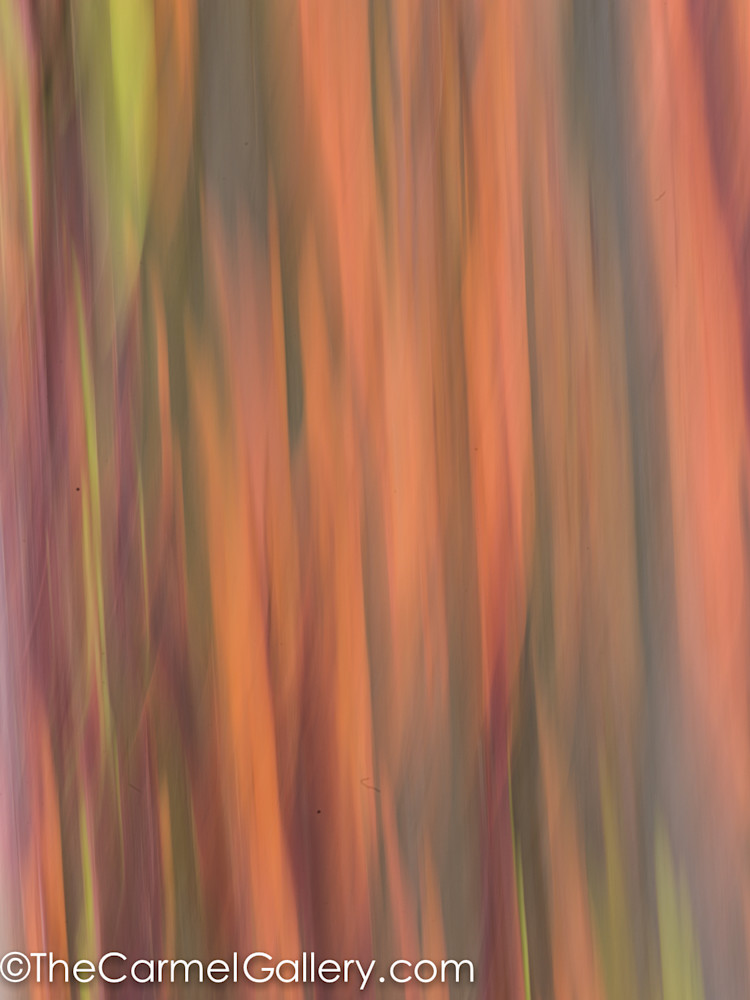 rainbow eucalyptus camera  painting