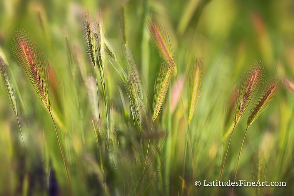 WEB Grassy Abstract