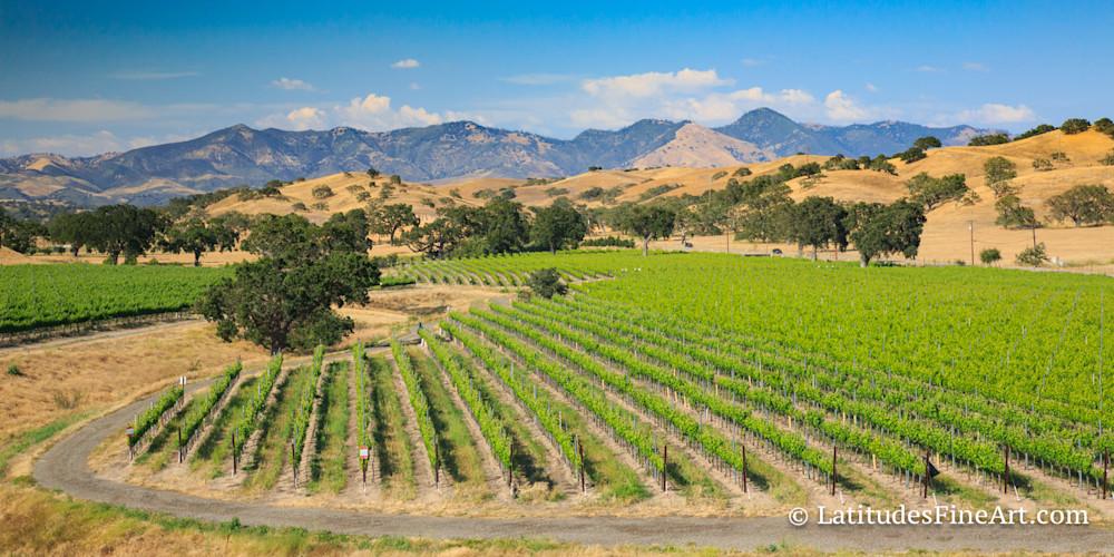 """""""Los Olivos Vineyard View"""""""