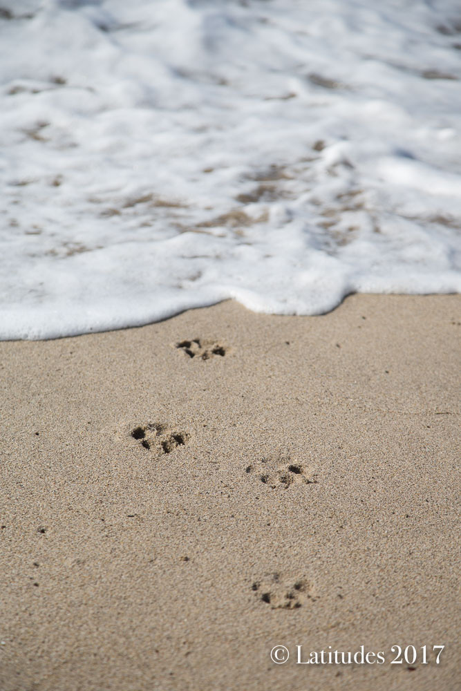 Paw Prints from the Sea