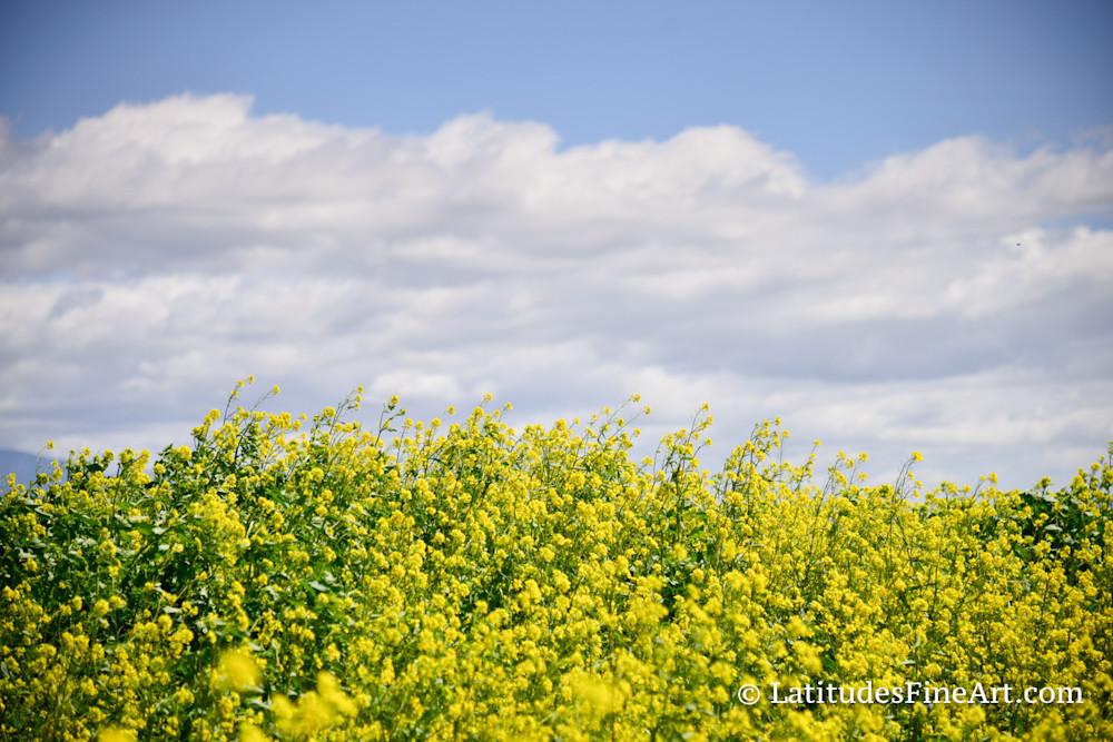 """""""Wild Flower Sky"""""""