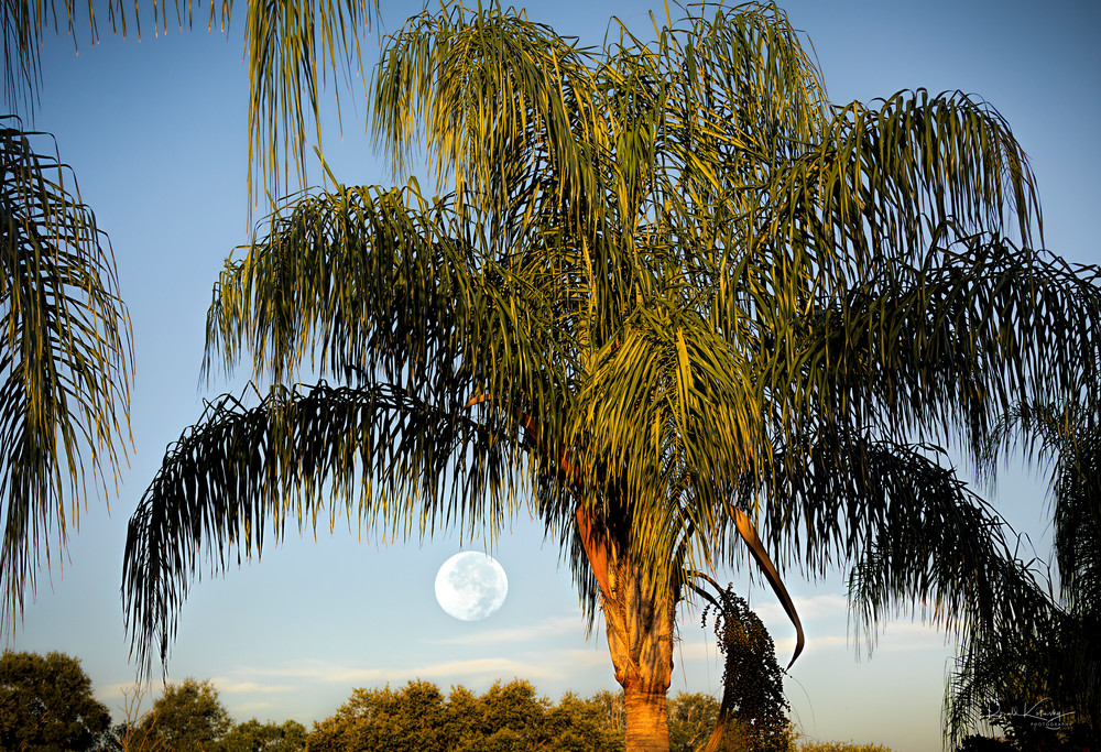 A beautiful sunrise full moon from Tampa Bay, Florida  | art photographs