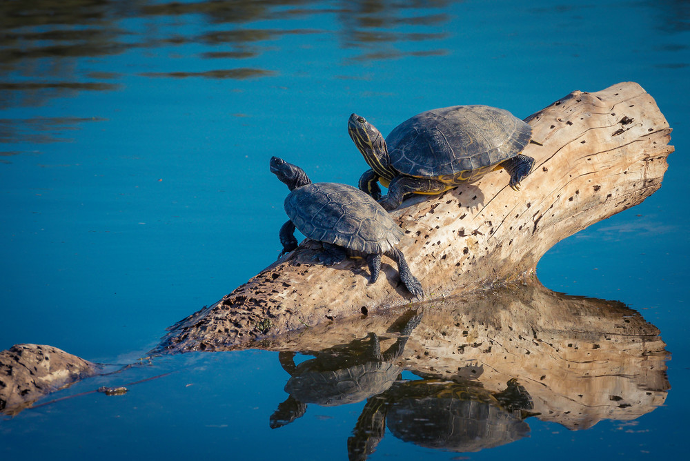 Mr and Mrs Turtle | Fine art photograph by Wayne Stadler