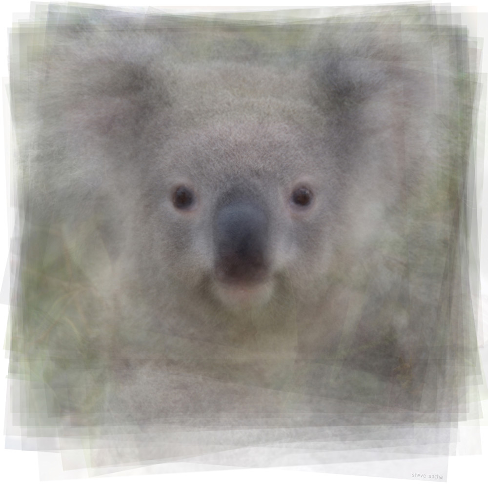 Overlay art – contemporary fine art prints of a Koala