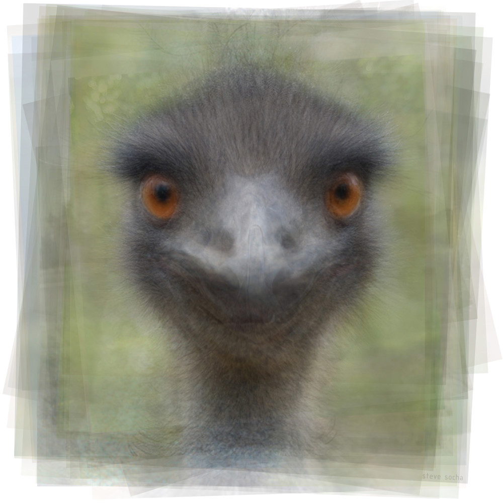 Overlay art – contemporary fine art prints of an Emu.