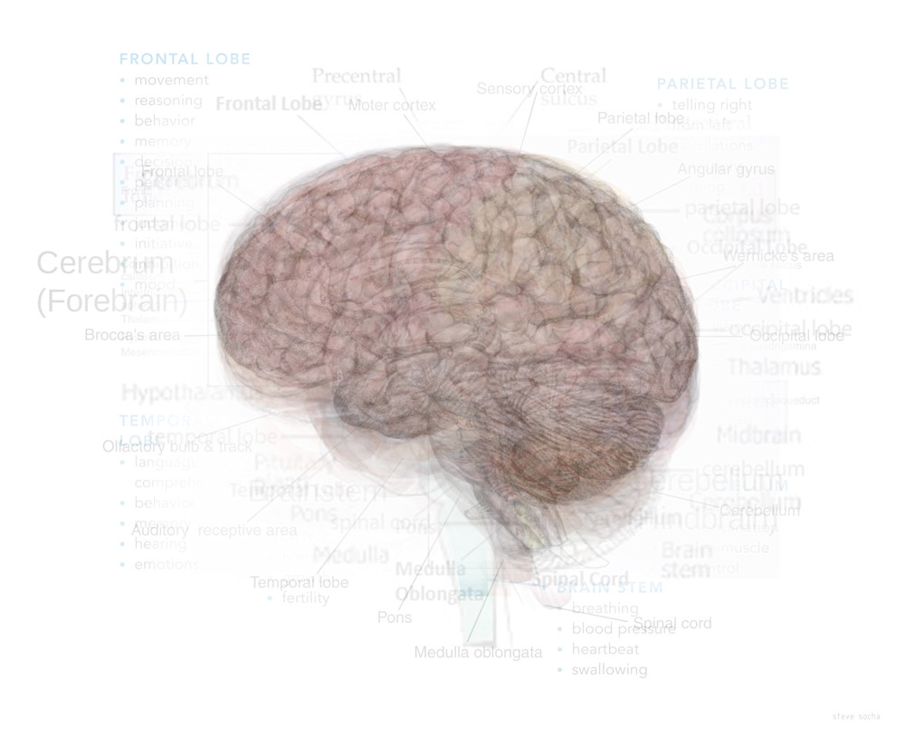 Overlay art – contemporary fine art prints of the Human Brain
