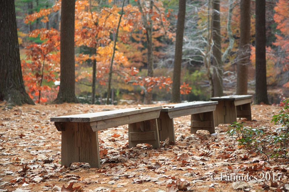 """""""Autumn Benches"""""""